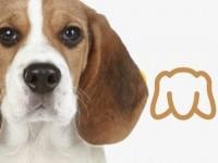 Po stopě – chytrý psí život